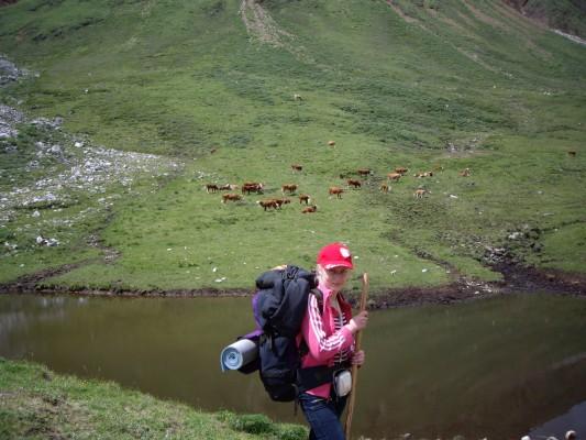 дорога на шумак - коровки