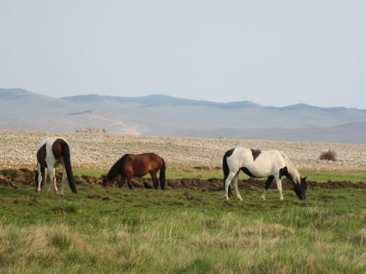 кони на байкале